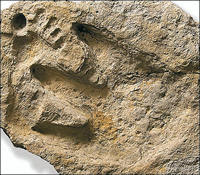 dino_man_footprint1